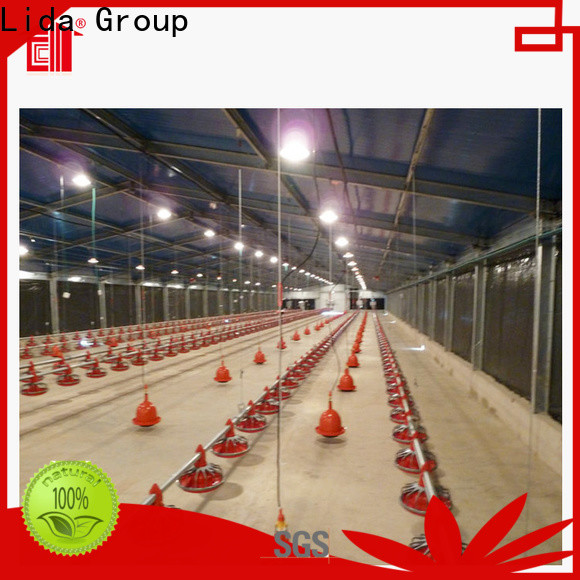 Top poultry shed layout for business